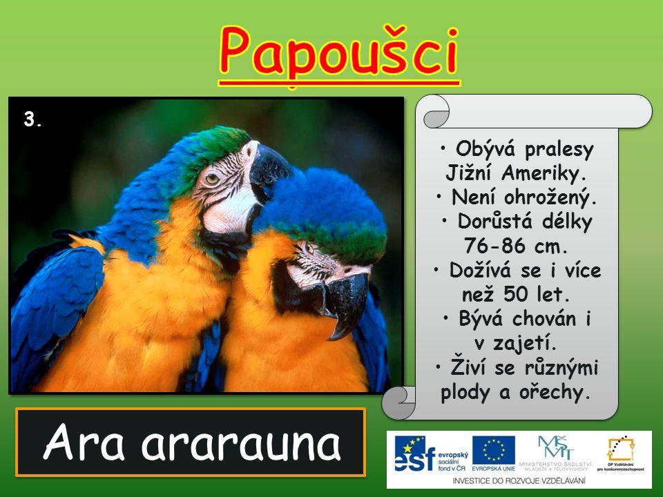 Ara ararauna 3. Obývá pralesy Jižní Ameriky. Není ohrožený. Dorůstá délky 76-86 cm. Dožívá se i více než 50 let. Bývá chován i v zajetí. Živí se různý