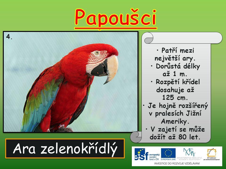 Ara hyacintový 5.Vyznačuje se modrým zbarvením. Je považován za největšího papouška světa.