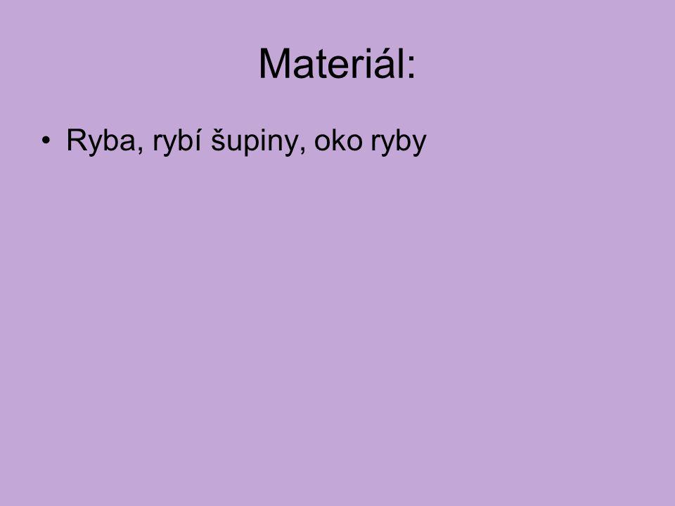 Materiál: Ryba, rybí šupiny, oko ryby