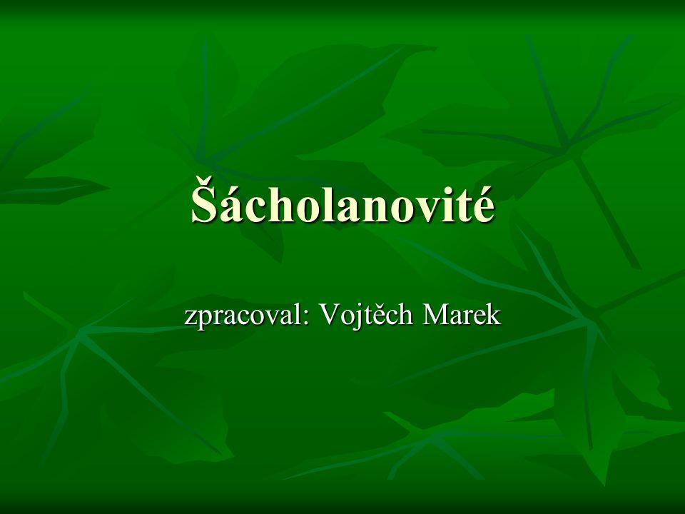 Čeleď: Šácholanovité(Magnoliaceae) Vyskytují se především v tropech a subtropech, u nás jen jako okrasné dřeviny (šácholan, liliovník).