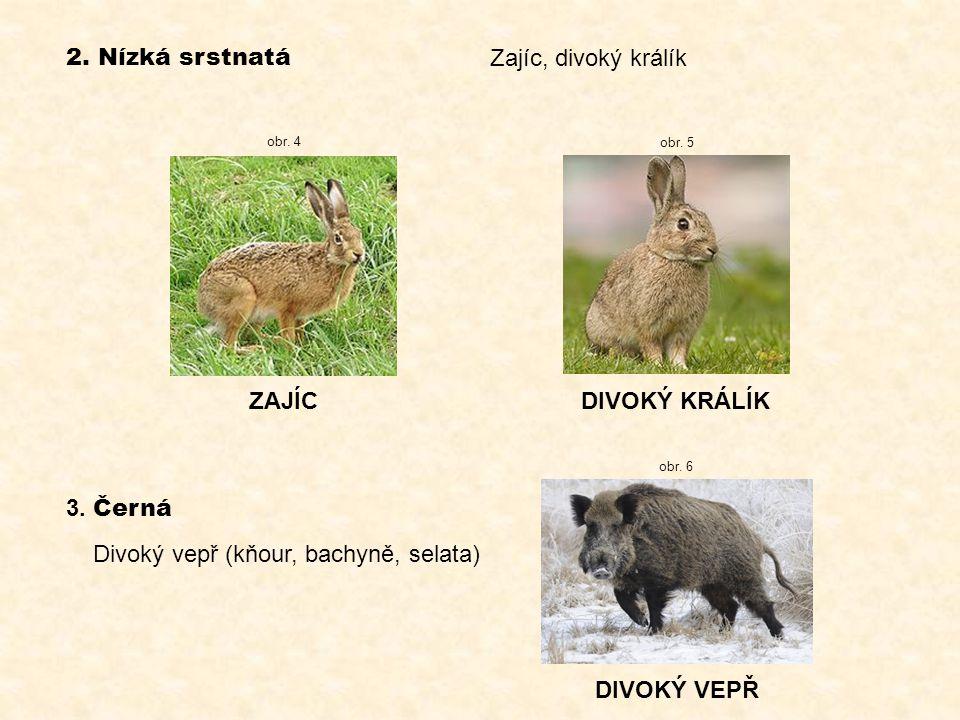 2. Nízká srstnatá ZAJÍCDIVOKÝ KRÁLÍK 3. Černá Divoký vepř (kňour, bachyně, selata) DIVOKÝ VEPŘ Zajíc, divoký králík obr. 5 obr. 4 obr. 6