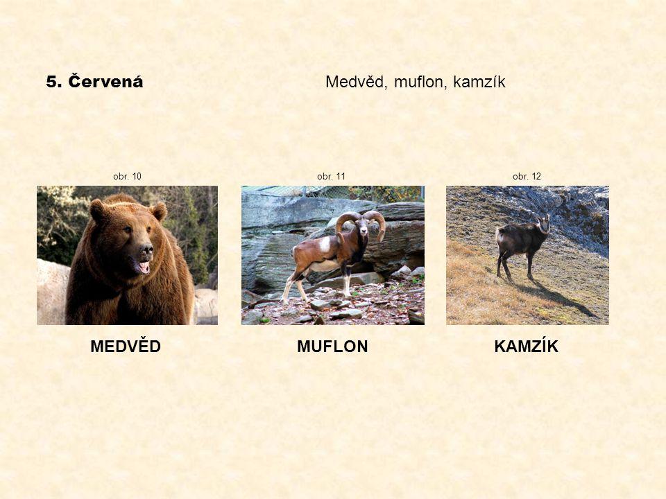 5. Červená Medvěd, muflon, kamzík MEDVĚDMUFLONKAMZÍK obr. 10obr. 11 obr. 12