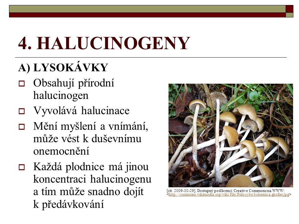 4. HALUCINOGENY A) LYSOKÁVKY  Obsahují přírodní halucinogen  Vyvolává halucinace  Mění myšlení a vnímání, může vést k duševnímu onemocnění  Každá