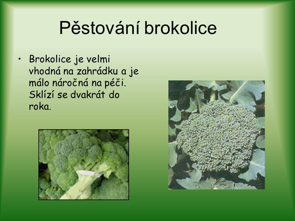 Pěstování brokolice Brokolice je velmi vhodná na zahrádku a je málo náročná na péči. Sklízí se dvakrát do roka.