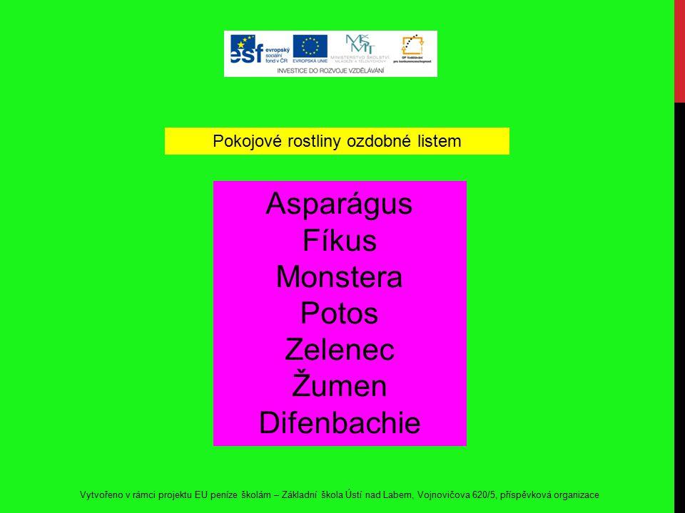 Asparágus Fíkus Monstera Potos Zelenec Žumen Difenbachie Pokojové rostliny ozdobné listem