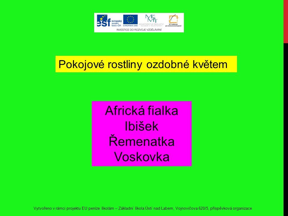 Vytvořeno v rámci projektu EU peníze školám – Základní škola Ústí nad Labem, Vojnovičova 620/5, příspěvková organizace Africká fialka Ibišek Řemenatka Voskovka Pokojové rostliny ozdobné květem