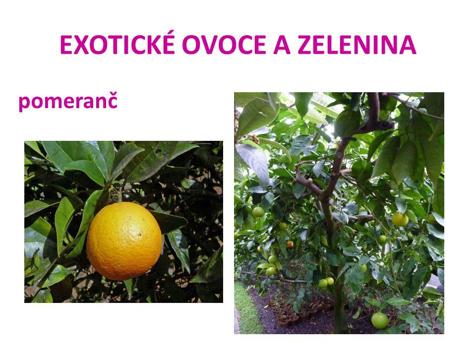 EXOTICKÉ OVOCE A ZELENINA pomeranč