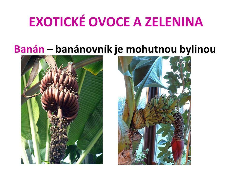 EXOTICKÉ OVOCE A ZELENINA Banán – banánovník je mohutnou bylinou