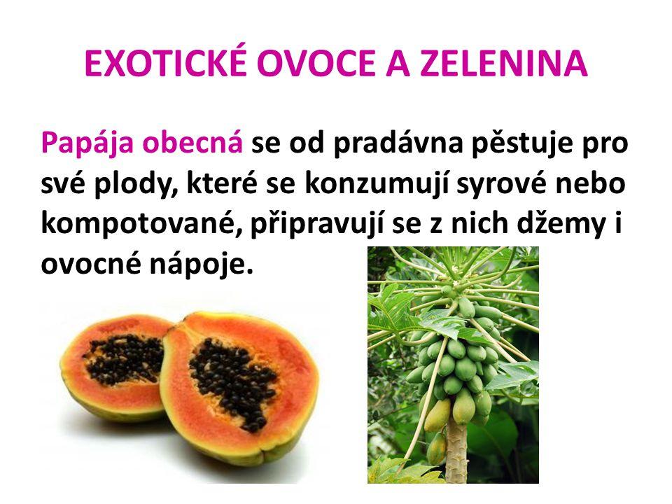 EXOTICKÉ OVOCE A ZELENINA Papája obecná se od pradávna pěstuje pro své plody, které se konzumují syrové nebo kompotované, připravují se z nich džemy i