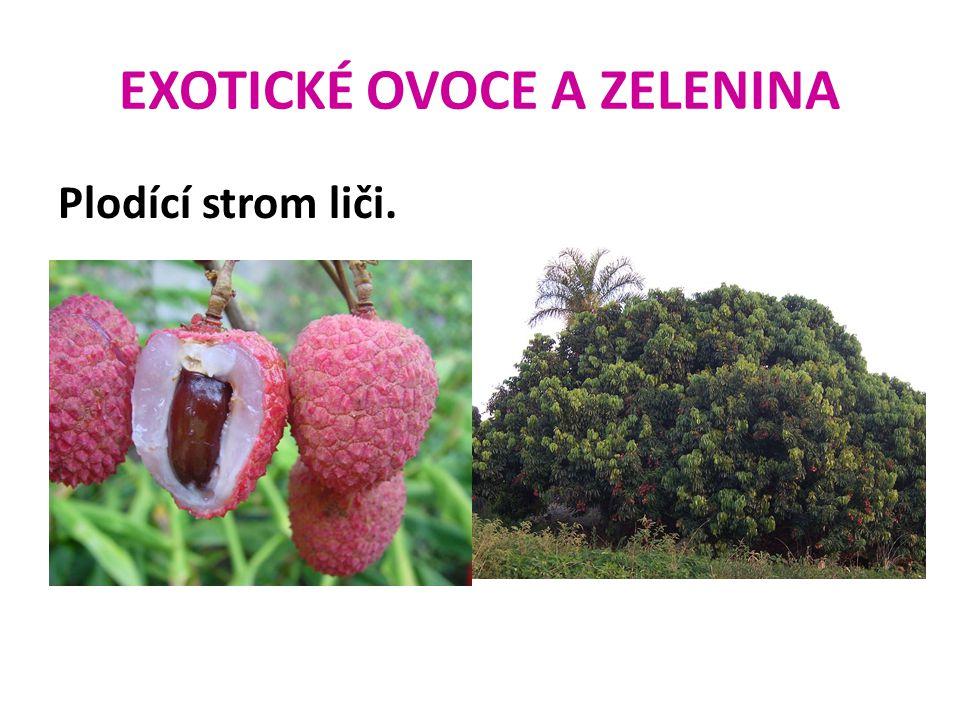 EXOTICKÉ OVOCE A ZELENINA Plodící strom liči.