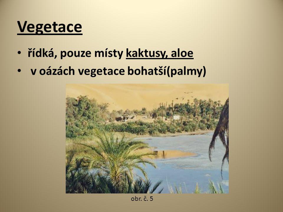 Vegetace řídká, pouze místy kaktusy, aloe v oázách vegetace bohatší(palmy) obr. č. 5
