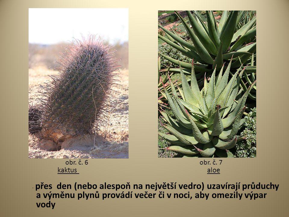 kaktus aloe - přes den (nebo alespoň na největší vedro) uzavírají průduchy a výměnu plynů provádí večer či v noci, aby omezily výpar vody obr. č. 6obr