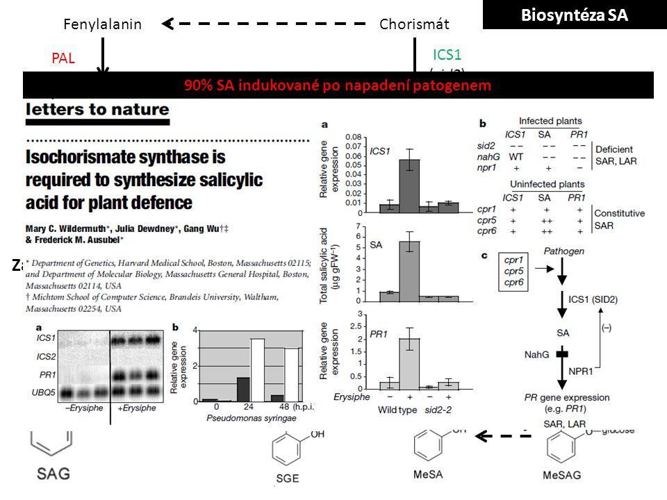 Chorismát Isochorismát Fenylalanin Kyselina skořicová Kyselina O-kumarová Benzoátové meziprodukty PAL ICS1 (sid2) IPL BA2H SAMT SABP2/MES Konjugáty SA