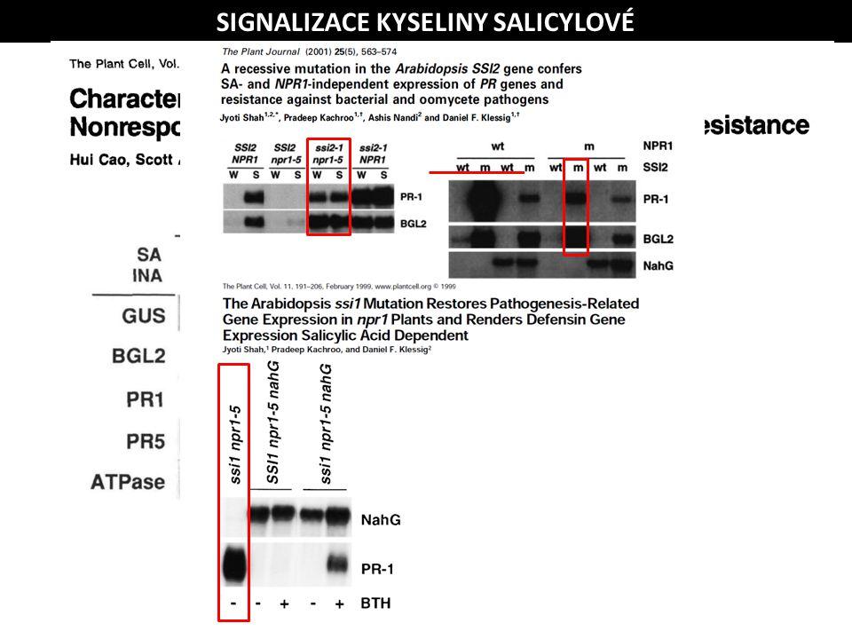 SIGNALIZACE KYSELINY SALICYLOVÉ SA PATOGEN NPR1 PR geny/rezistence SA PATOGEN PR geny/rezistence (pathogenesis related) SA PATOGEN NPR1 PR geny/rezist