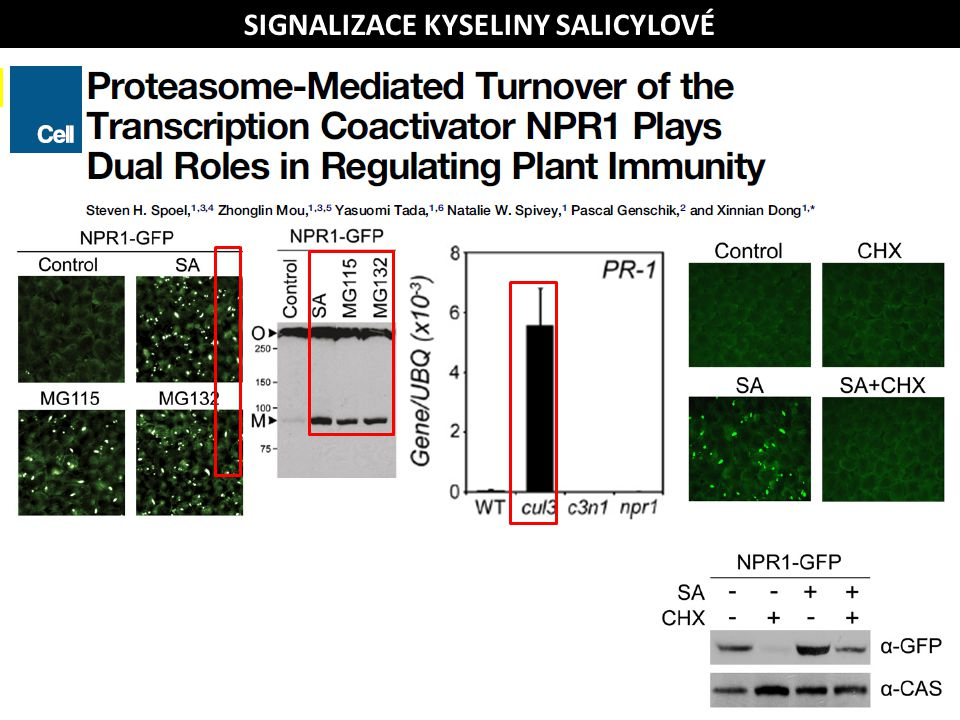 SA Cytosol Jádro PATOGEN Δ redox SIGNALIZACE KYSELINY SALICYLOVÉ