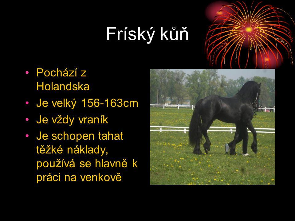 Fríský kůň Pochází z Holandska Je velký 156-163cm Je vždy vraník Je schopen tahat těžké náklady, používá se hlavně k práci na venkově
