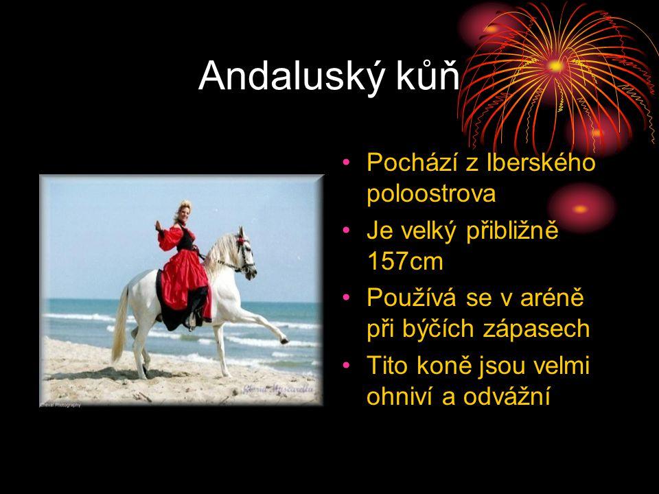 Andaluský kůň Pochází z Iberského poloostrova Je velký přibližně 157cm Používá se v aréně při býčích zápasech Tito koně jsou velmi ohniví a odvážní