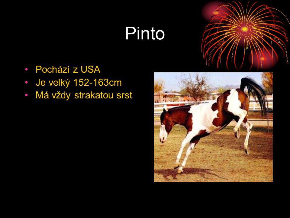 Pinto Pochází z USA Je velký 152-163cm Má vždy strakatou srst překládá jako paint horse v Anglii zase piebald