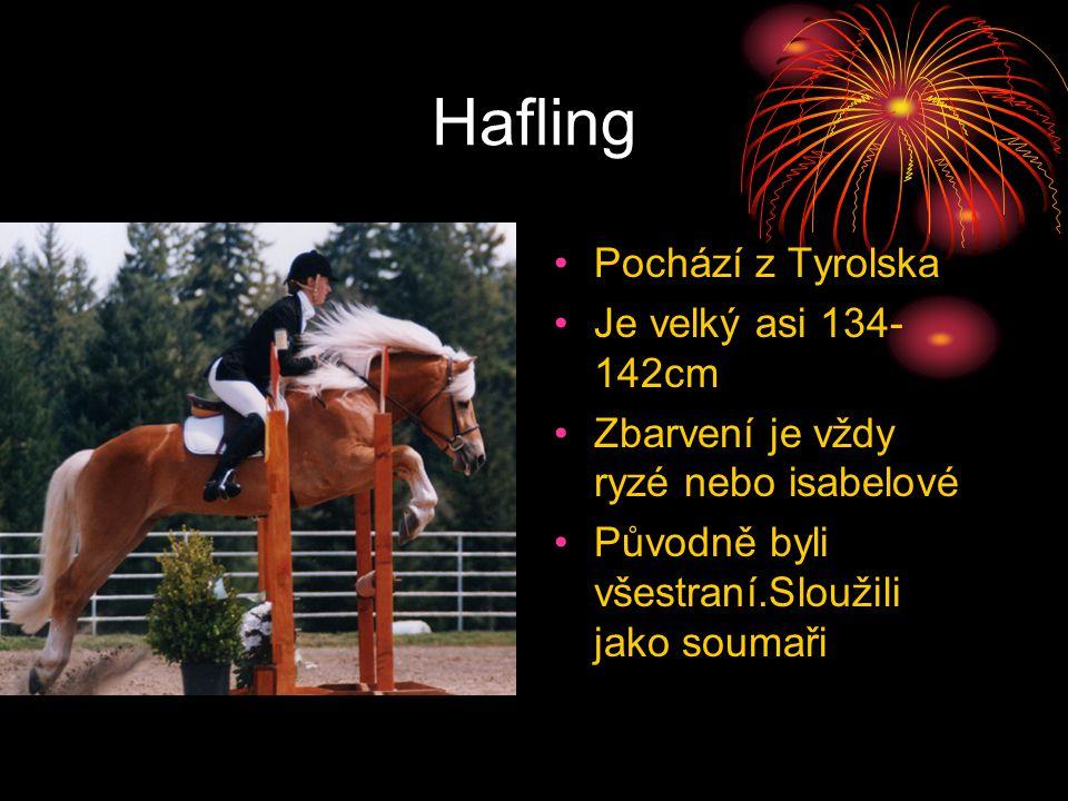 Hafling Pochází z Tyrolska Je velký asi 134- 142cm Zbarvení je vždy ryzé nebo isabelové Původně byli všestraní.Sloužili jako soumaři