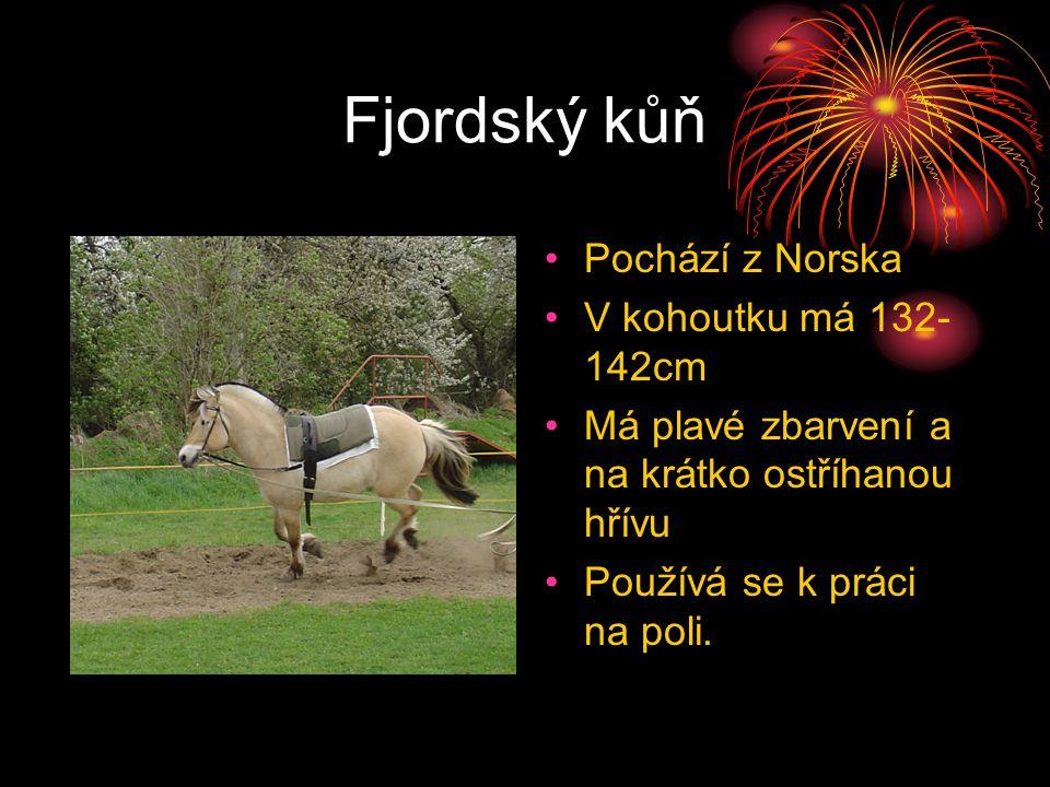 Fjordský kůň Pochází z Norska V kohoutku má 132- 142cm Má plavé zbarvení a na krátko ostříhanou hřívu Používá se k práci na poli.