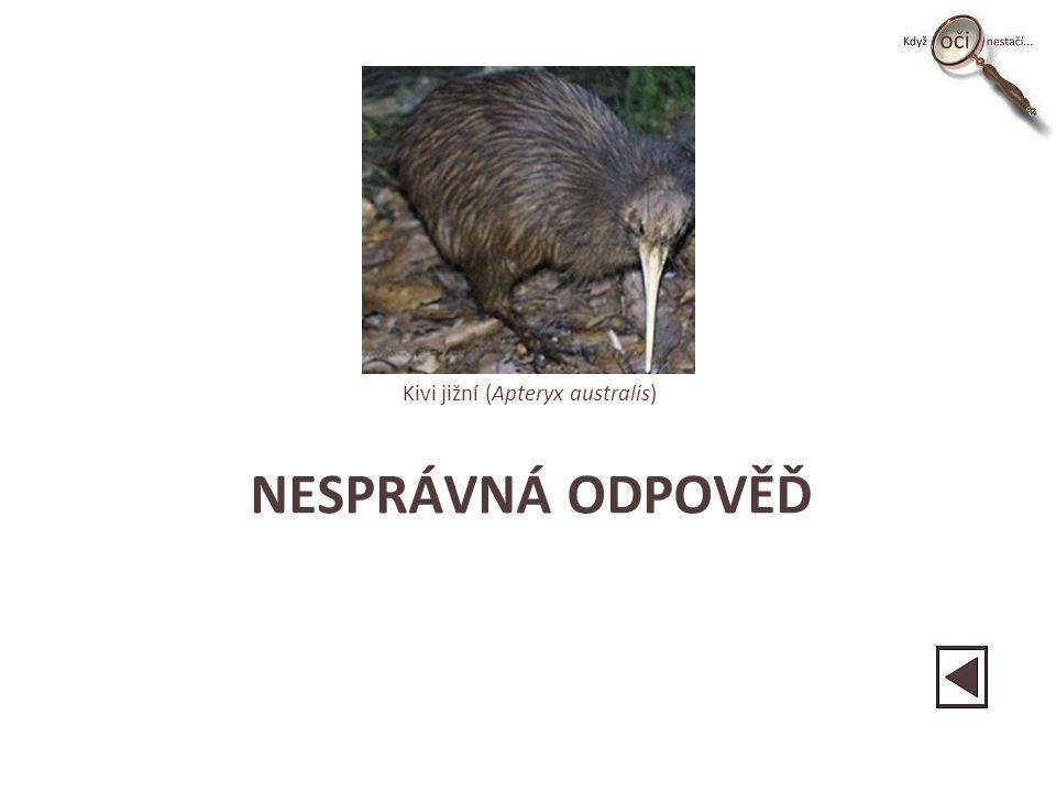 NESPRÁVNÁ ODPOVĚĎ Kivi jižní (Apteryx australis)