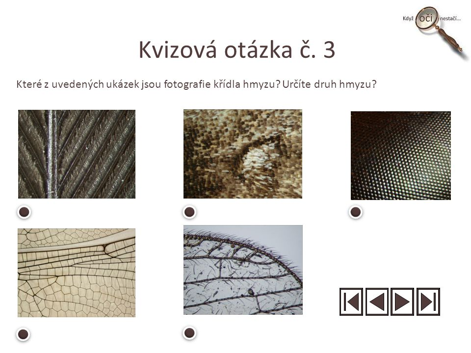 Kvizová otázka č. 3 Které z uvedených ukázek jsou fotografie křídla hmyzu? Určíte druh hmyzu?