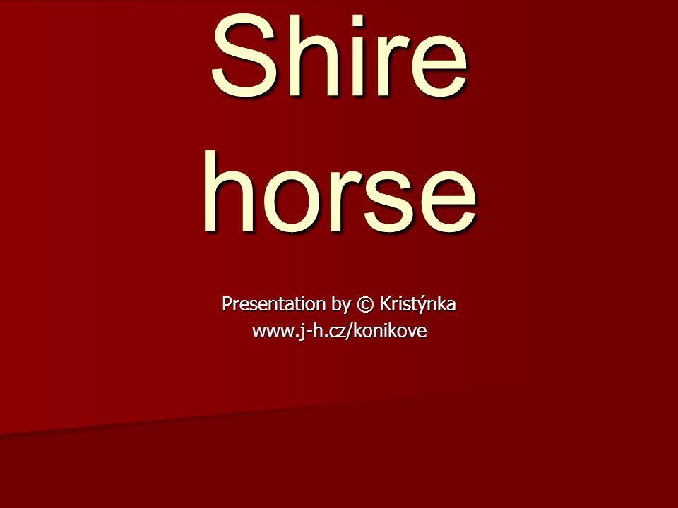 Shirský kůň je tak typicky anglický jako buldok a mnozí lidé ho považují za nejlepšího těžkého tažného koně.