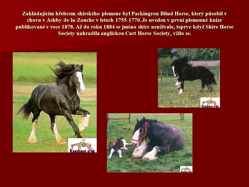 Zakládajícím hřebcem shirského plemene byl Packingron Blind Horse, který působil v chovu v Ashby-de-la-Zouche v letech 1755-1770.