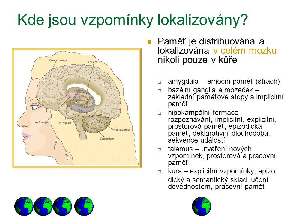 Kde jsou vzpomínky lokalizovány? Paměť je distribuována a lokalizována v celém mozku nikoli pouze v kůře  amygdala – emoční paměť (strach)  bazální