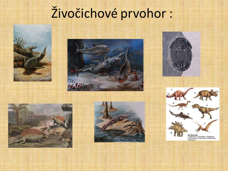 Živočichové prvohor :