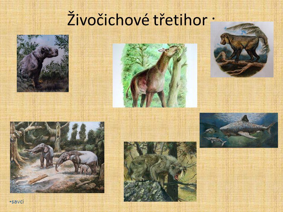 Živočichové třetihor : savci