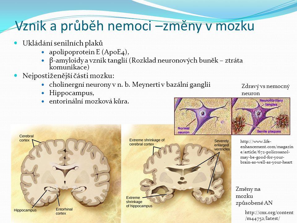 Vznik a průběh nemoci –změny v mozku Ukládání senilních plaků apolipoprotein E (ApoE4), β-amyloidy a vznik tanglií (Rozklad neuronových buněk – ztráta