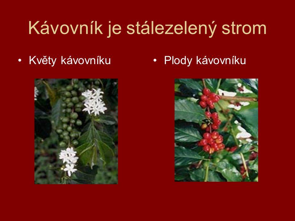 Mletí kávy Dříve se káva mlela ručně mezi dvěma kameny jako obilí Dnes se používají mlýnky elektrické s mlecími kameny