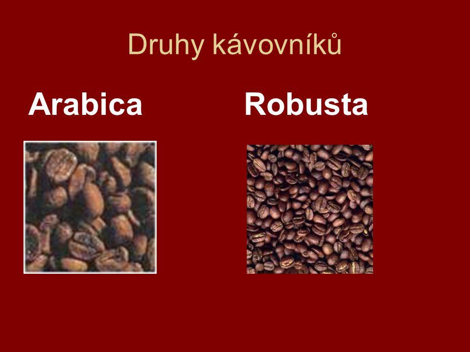 Druhy kávy - Arabica  Vysoký keř, dosahující výšky 3 metrů.