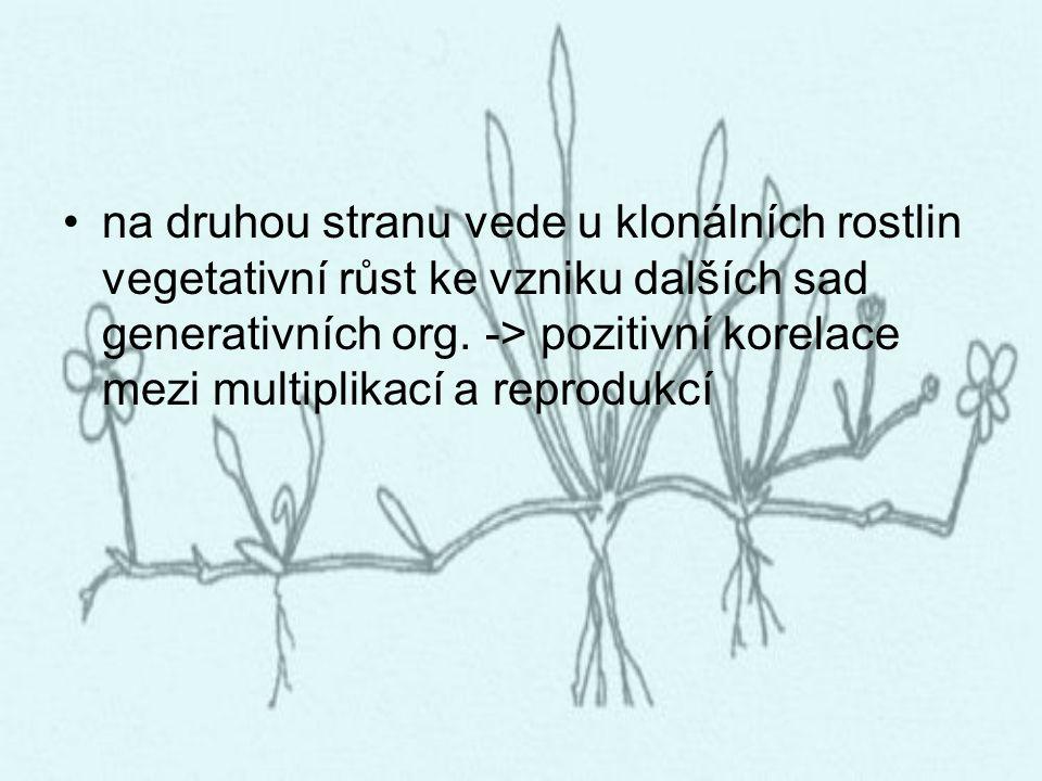 na druhou stranu vede u klonálních rostlin vegetativní růst ke vzniku dalších sad generativních org. -> pozitivní korelace mezi multiplikací a reprodu