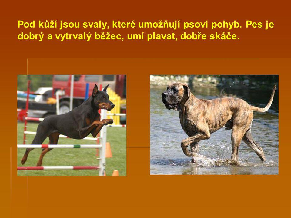 Pod kůží jsou svaly, které umožňují psovi pohyb.