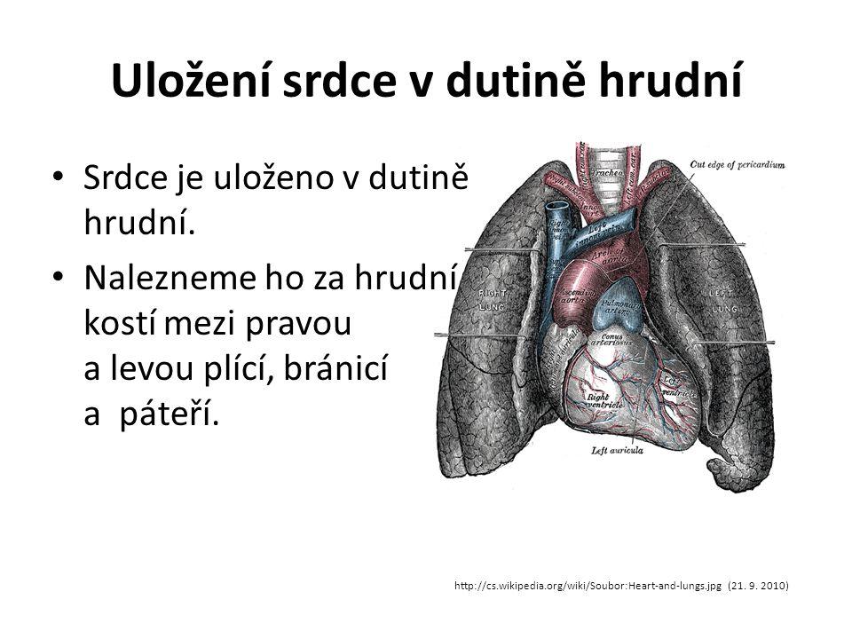 Uložení srdce v dutině hrudní http://cs.wikipedia.org/wiki/Soubor:Heart-and-lungs.jpg (21. 9. 2010) Srdce je uloženo v dutině hrudní. Nalezneme ho za