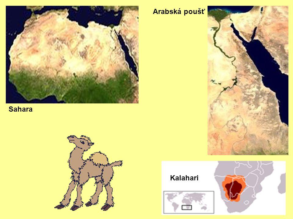 Sahara Kalahari Arabská poušť