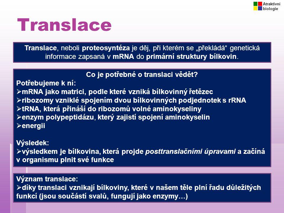 """Translace Translace, neboli proteosyntéza je děj, při kterém se """"překládá"""" genetická informace zapsaná v mRNA do primární struktury bílkovin. Co je po"""