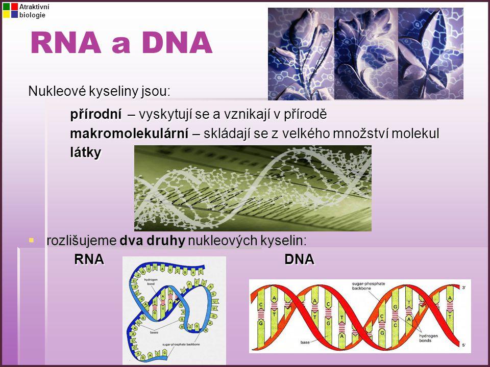 RNA a DNA Nukleové kyseliny jsou: přírodní makromolekulární látky – vyskytují se a vznikají v přírodě – skládají se z velkého množství molekul  rozli