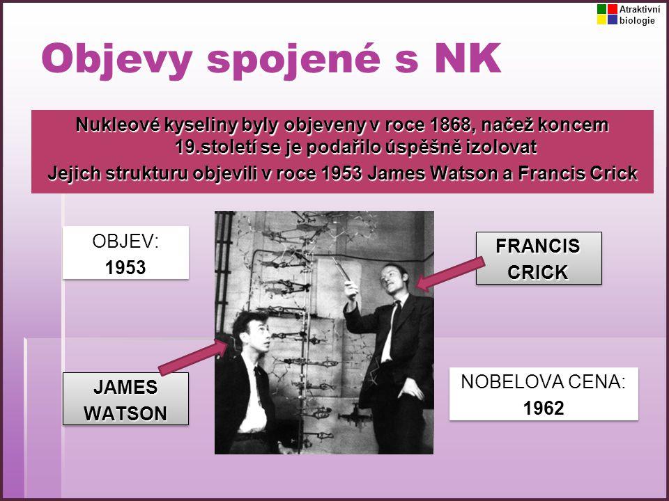 Objevy spojené s NK Nukleové kyseliny byly objeveny v roce 1868, načež koncem 19.století se je podařilo úspěšně izolovat Jejich strukturu objevili v r