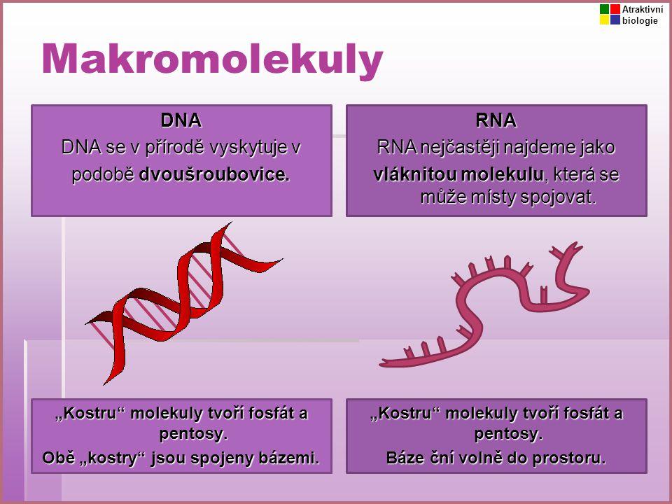 Makromolekuly DNA DNA se v přírodě vyskytuje v podobě dvoušroubovice. RNA RNA nejčastěji najdeme jako vláknitou molekulu, která se může místy spojovat