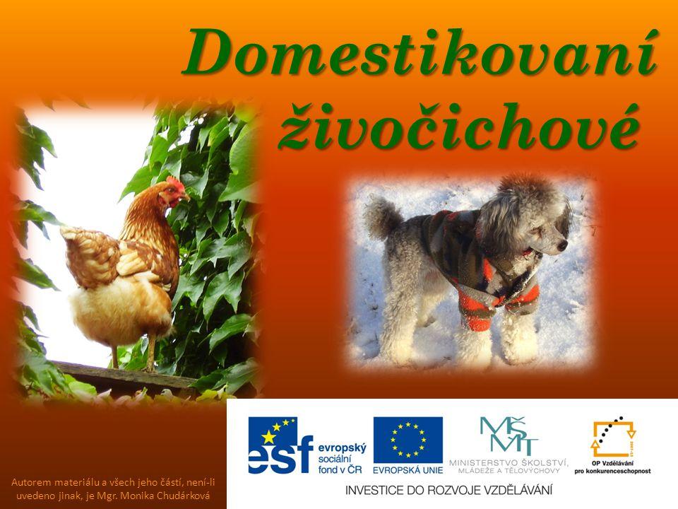 Domestikovaní živočichové Domestikovaní živočichové Autorem materiálu a všech jeho částí, není-li uvedeno jinak, je Mgr. Monika Chudárková
