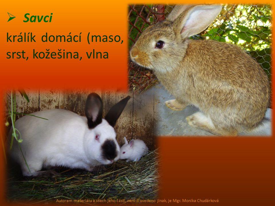  Savci králík domácí (maso, srst, kožešina, vlna Autorem materiálu a všech jeho částí, není-li uvedeno jinak, je Mgr. Monika Chudárková