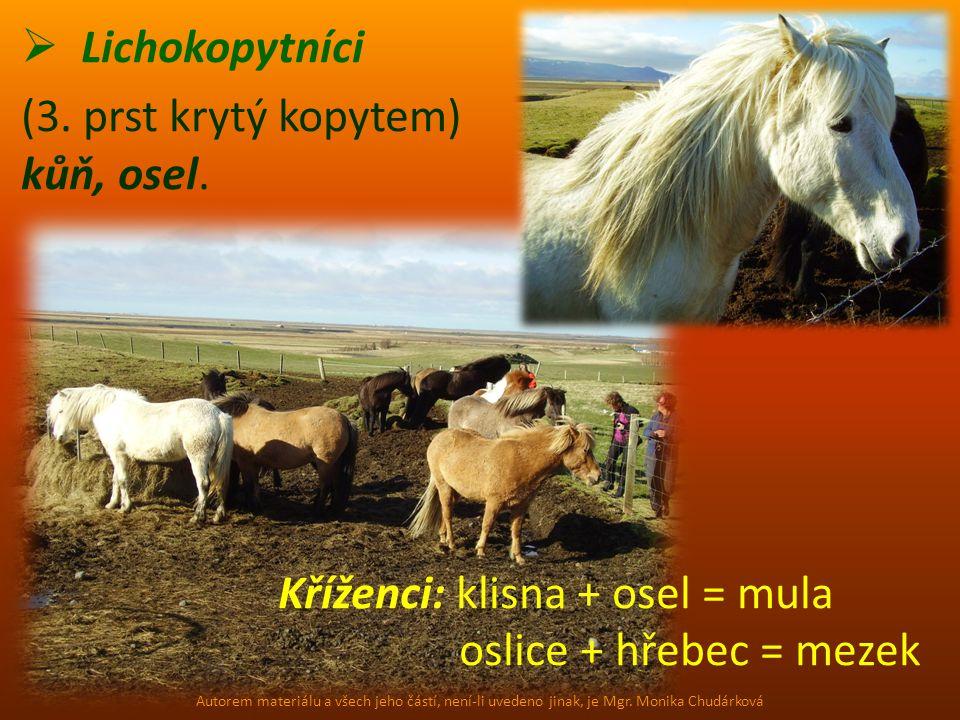  Lichokopytníci (3. prst krytý kopytem) kůň, osel. Kříženci: klisna + osel = mula oslice + hřebec = mezek Autorem materiálu a všech jeho částí, není-