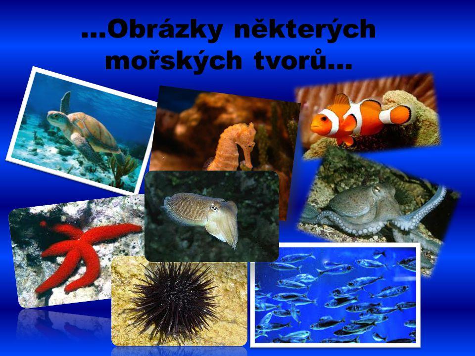 …Obrázky některých mořských tvorů…