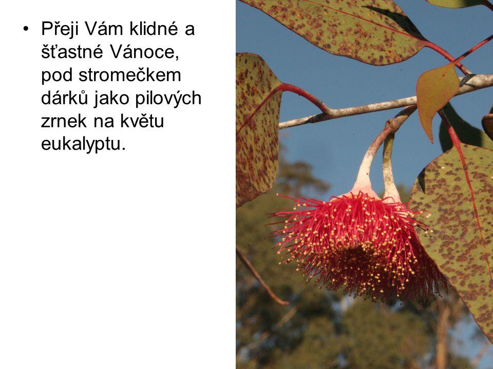 Přeji Vám klidné a šťastné Vánoce, pod stromečkem dárků jako pilových zrnek na květu eukalyptu.
