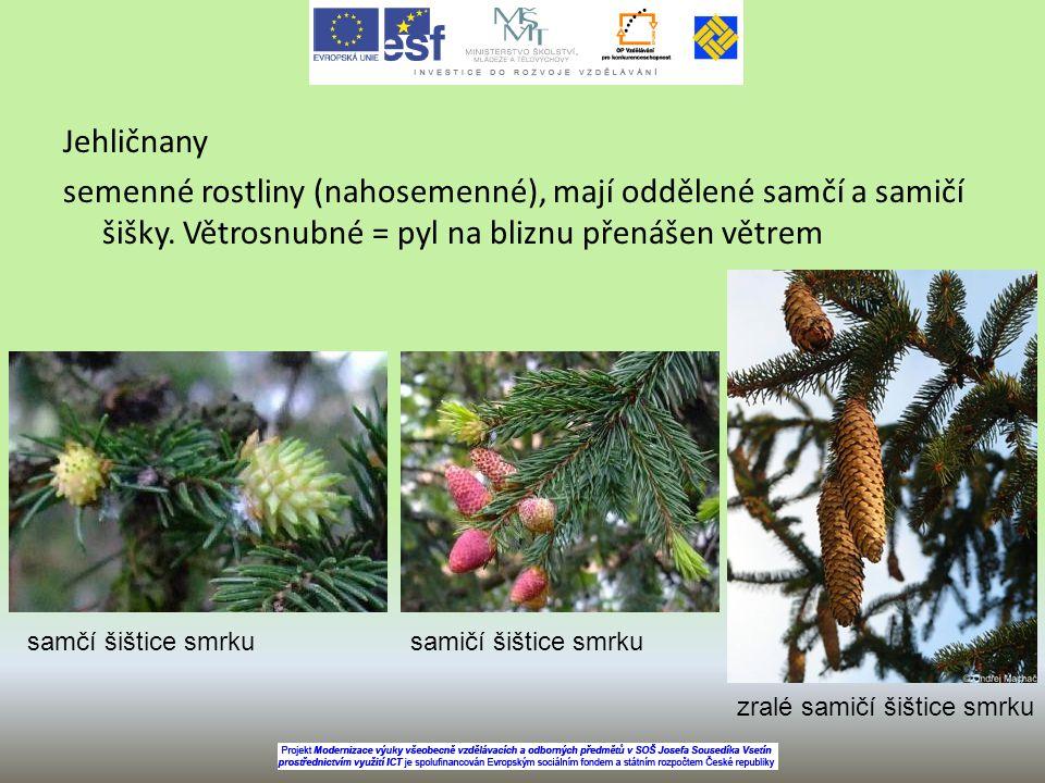 Jehličnany semenné rostliny (nahosemenné), mají oddělené samčí a samičí šišky. Větrosnubné = pyl na bliznu přenášen větrem samčí šištice smrkusamičí š