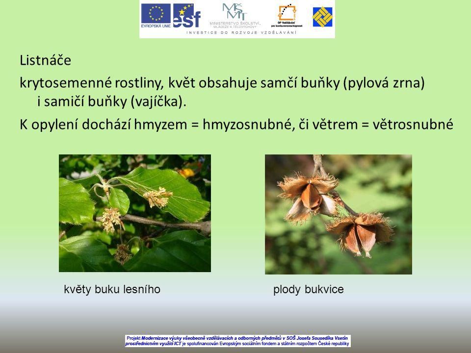 Listnáče krytosemenné rostliny, květ obsahuje samčí buňky (pylová zrna) i samičí buňky (vajíčka). K opylení dochází hmyzem = hmyzosnubné, či větrem =