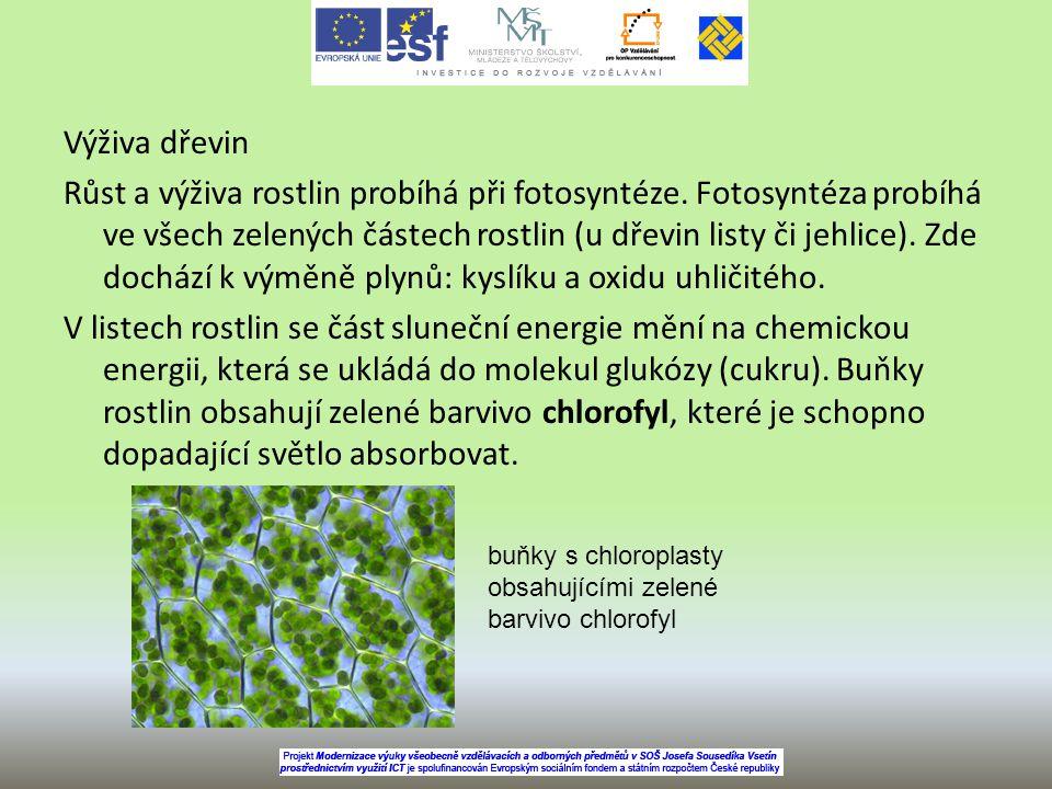 Výživa dřevin Růst a výživa rostlin probíhá při fotosyntéze. Fotosyntéza probíhá ve všech zelených částech rostlin (u dřevin listy či jehlice). Zde do